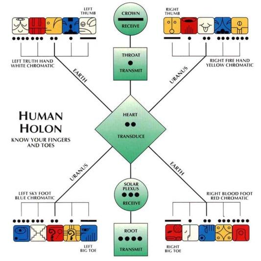 human-holon-20-seals