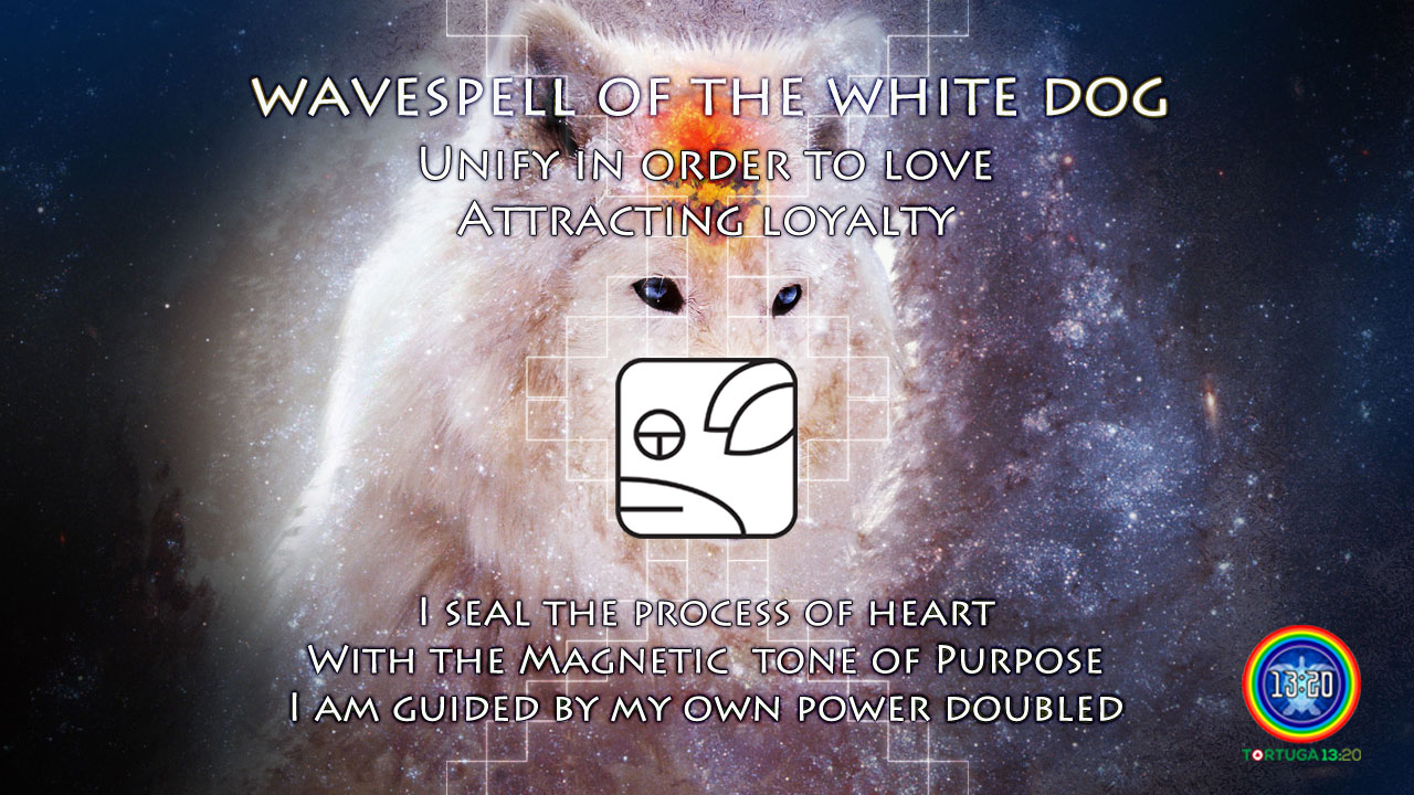 Wavespell 14 of the White Dog ~ Dreamspell Journey – Tortuga 13:20